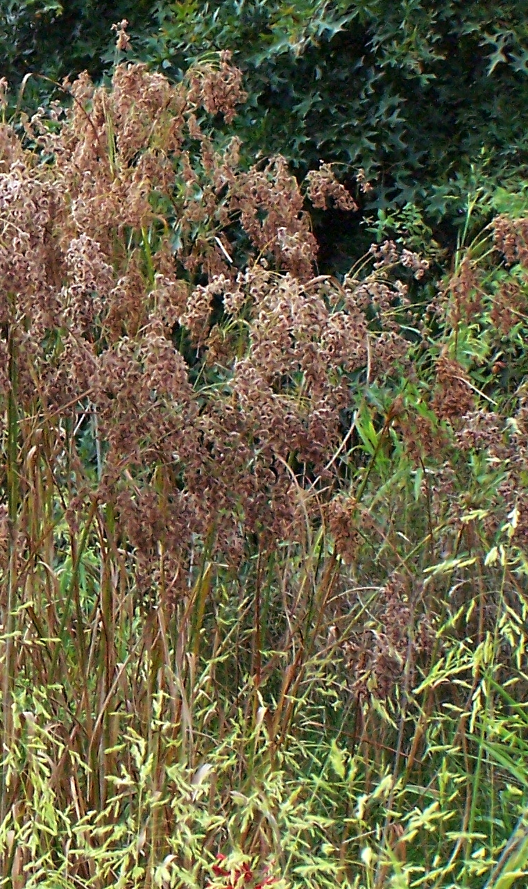 Best Soil Pond Plants